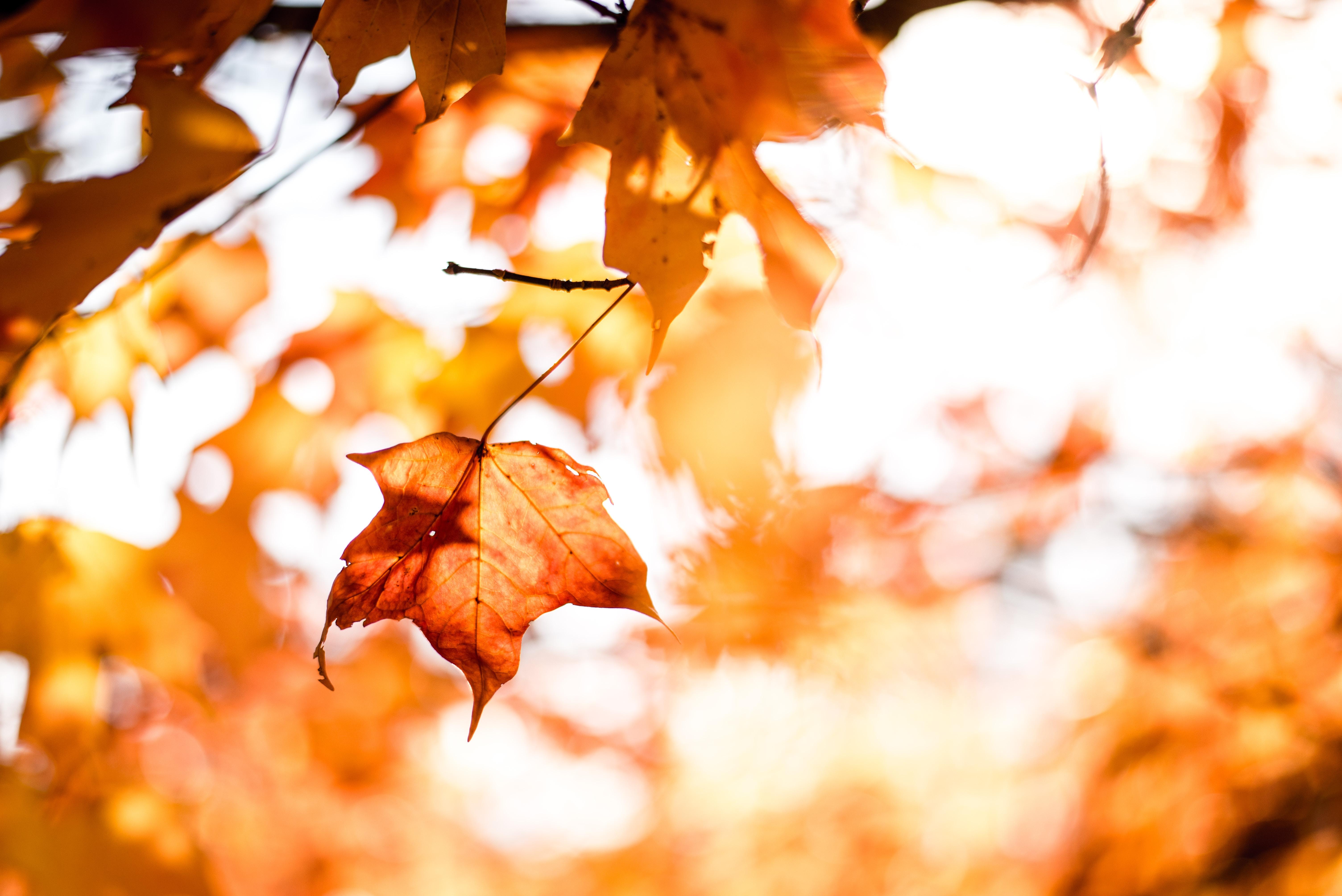 秋になると感じるもの寂しさ…。心の病?