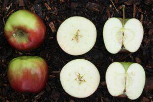 おすすめのりんごの食べ方、おすすめレシピを紹介